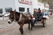 Taking their donkey to the dealership for a tune-up