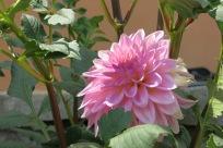 Another random flower