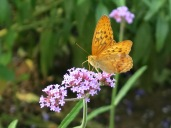 Butterfly's Lunch