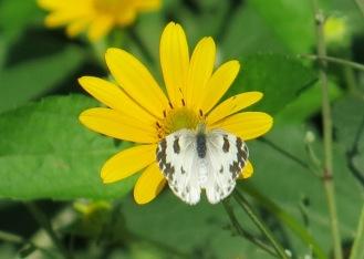 Kepu Park Butterfly