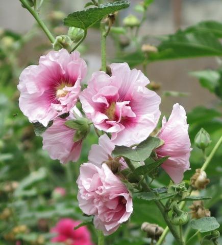 Random Flower