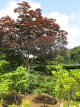 Trees at the Flower Garden