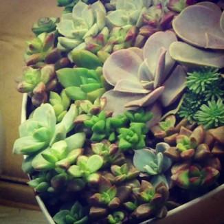 Tiny beauties