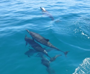 And more dolphins
