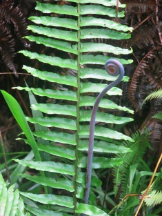 Old World Forked Fern