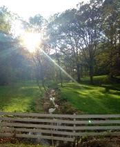 Afternoon Sun
