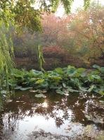 Light on Lotus