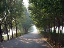 Down the Path