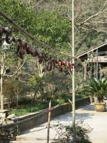 Sausage Drying
