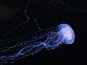 Those jellyfish