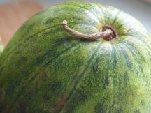 Green Melon