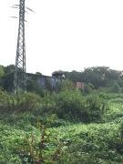 Kudzu View